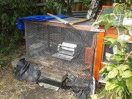 keeping chickens on contaminated soil good life permaculture