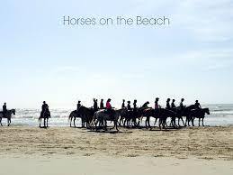 horses on the beach texas coast beach house
