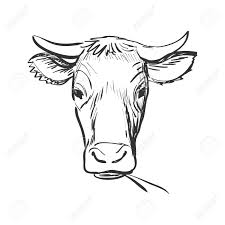 doodle cow cow skull sketch isolated in white background