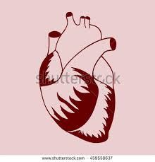 human heart sketch style vector illustration stock vector