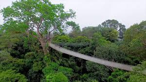 canopy amazon amazon river trips amazon river amazon lodge iquitos amazon