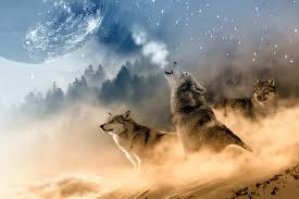 wolves wolf howling free photo on pixabay