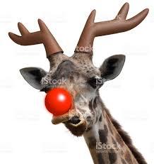 funny giraffe dressed as santas red nosed reindeer for christmas