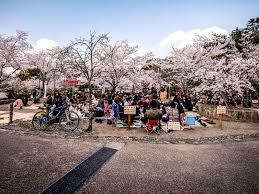 why you need to experience japan u0027s cherry blossom season qantas