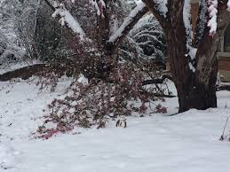 here are 7 tips on what to do with your snow damaged trees