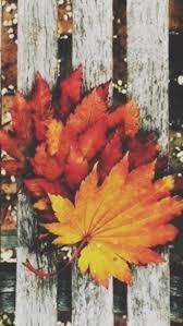 cute baby boy autumn leaves wallpapers best 25 fall wallpaper desktop ideas on pinterest fall
