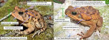 Fgcu Map 20th Annual Southwest Florida Cisma Invasive Species Workshop And