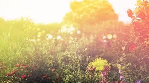 sunlight l for plants bokeh flowers plants sunlight wallpaper 87559