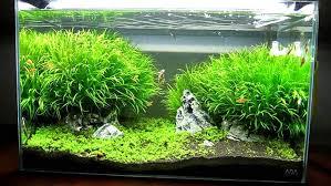 marineland aquatic plant led lighting system w timer 48 60 the best aquarium light for beginners
