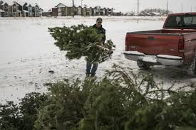 christmas tree recycling drop off sites now open in bozeman city
