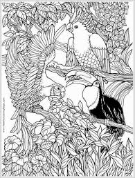 coloring pages for adults to print and color free parrots bird