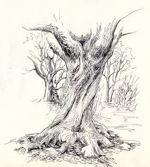tree drawing drawings pinterest drawings sketches and