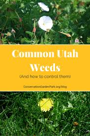 most common utah weeds
