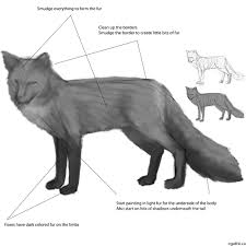 creating a realistic fox drawing step by step drawing tips on
