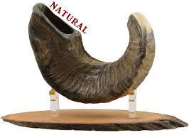 shofar horn for sale buy professional ram s horn shofar small proshofar
