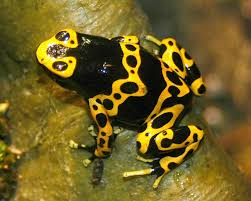 frogs animals and english