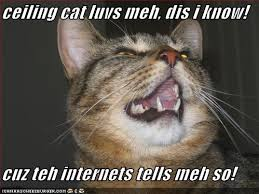 Lol Cat Meme - lolcat bible the bible within the social network contemporary