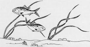 fish nursuries