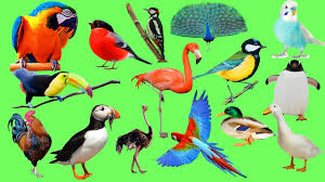 sounds and names animals birds for kids singing birds and