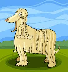 afghan hound mandarin long hair stock vectors illustrations and cliparts stockfresh