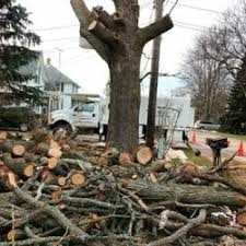 discount tree stump removal tree services 4724 lansing rd