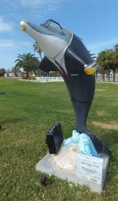 114 best clearwater u0027s dolphins images on pinterest dolphins