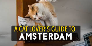 Cat Lover Meme - catspotting a crazy cat lover s guide to cats in amsterdam