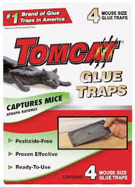 victor poison free buy victor poison free m193 insect trap 4 pack in cheap price on