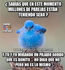 Sexo Meme - sexo mundial y tu mirando un pájaro gordo humor memes and random