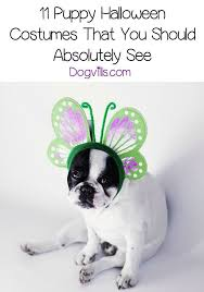 Cute Small Dog Halloween Costumes 20 Puppy Halloween Costumes Ideas Puppy