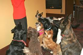 thanksgiving dog doggie heaven hotel things to do with dogs