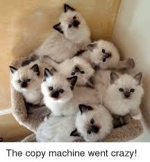 Copy Machine Meme - the copy machine went crazy crazy meme on sizzle