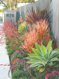 Modern Front Yard Desert Landscaping With Palm Tree And Best 25 Tropical Pool Landscaping Ideas On Pinterest Tropical