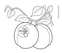 apricots fruits coloring pages for kids printable free coloing