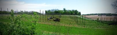 hops supplies buck creek hops iowa hops grower u0026 distributor