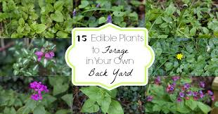 Plants Of Season 4 Joanna by 15 Edible Plants To Forage In Your Own Back Yard And Here We Are
