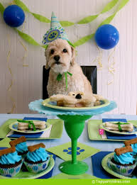 dog birthday party bark bark news letter