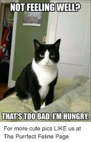 Purrrfect Meme - not feeling well thats too badim hungry for more cute pics like us