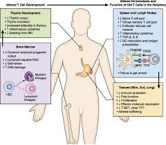 aging of the t cell compartment in mice and humans from no naive