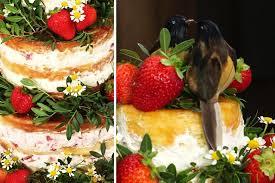 hochzeitstorte erdbeeren zitronentorte mit erdbeer mascarpone füllung rezept mascarpone