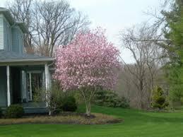 my favorite ornamental trees mccoy landscape services