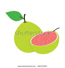 guava cut stock vectors images u0026 vector art shutterstock