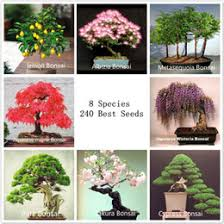 gift tree free shipping gift tree free shipping canada best selling gift tree free