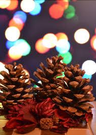 free images flower petal red color dessert lighting decor