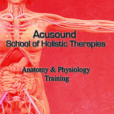 Study Anatomy And Physiology Online Acusound Anatomy U0026 Physiology Training Course Home Study