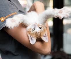 cat days of summer adoption event salt lake magazine