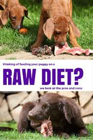 the pros and cons of raw feeding for dogs dog dog food and pet care