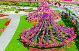 quiet corner dubai miracle garden world u0027s biggest natural flower