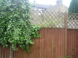 help bindweed is coming over from neighbour gardening forum