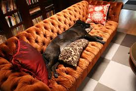 Chesterfield Sofa History Chesterfield Sofas 5 Reasons To Own One